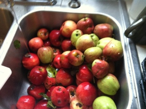 Apples in sink ready for wash