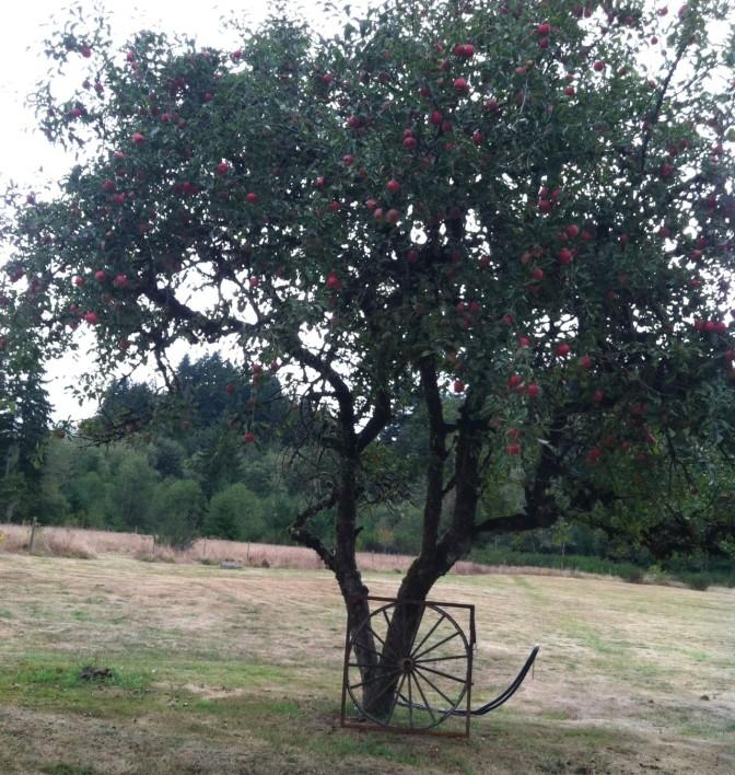 apples leaving